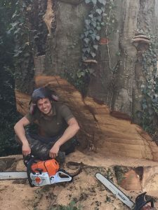 Large Beech Tree fell-good to get it down before Winter sets in